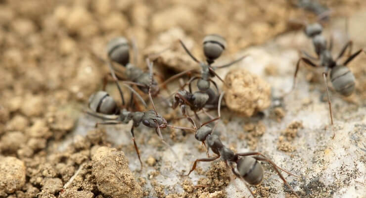 The Ant City